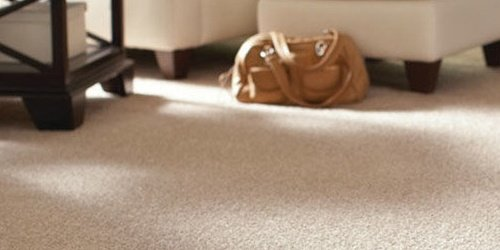 Wet Carpet Mold Dangers
